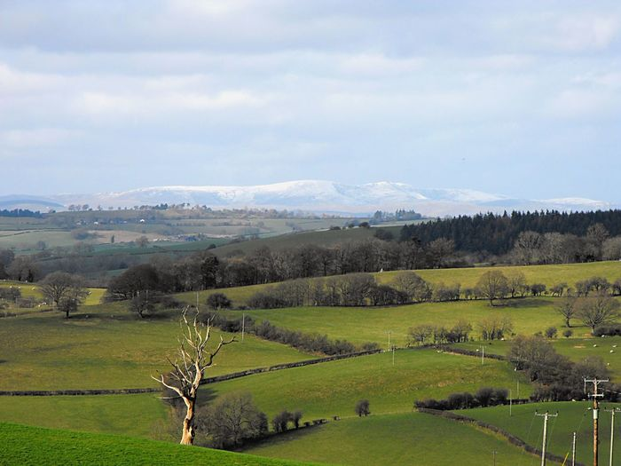 Snow covered Snowdonia & fields Farmland Hills Wales UK Beauty In Nature Cloud - Sky Day Environment Field Grass Green Color Idyllic Landscape Mountain Range Nature No People Non-urban Scene Outdoors Plant Rural Scene Scenics - Nature Sky Snowdonia Tranquil Scene Tranquility Tree