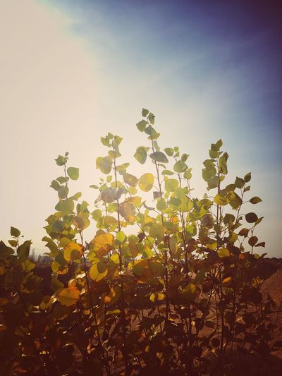 Sky Plant Nature Growth Tree No People Beauty In Nature Sunlight Outdoors Plant Part Leaf Day