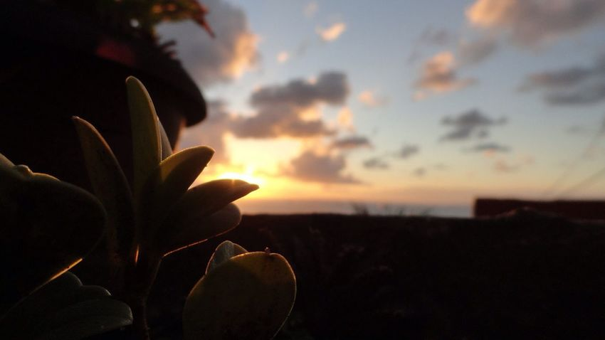 Sunset Getting Inspired Taking Photos Nature Macro Followme Eye4photography  Plants Paisaje Simple