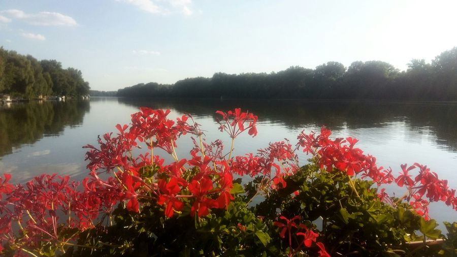 Tree Red Water No People Outdoors Day Nature Beauty In Nature Sky Hungary Tiszacsege Front View Childhood Cloud - Sky Beauty Flowers, Nature And Beauty Flower Photography Waterscape