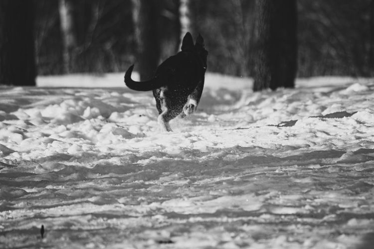 Animal Themes Beauty In Nature Beauty In Nature Blackandwhite Cold Temperature Day Dog Mammal Men Monochrome Monochrome_life Motion Nature One Animal One Person Outdoors Pgotography In Motion Photography Portrait Real People Snow Winter