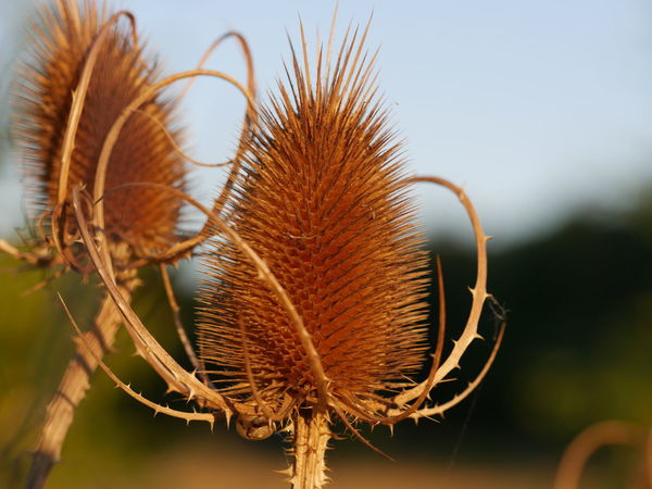 Backgrounds Beauty In Nature Beauty In Nature Brown Close-up Dried Focus On Foreground Fragility Nature Plant The Purist (no Edit, No Filter)