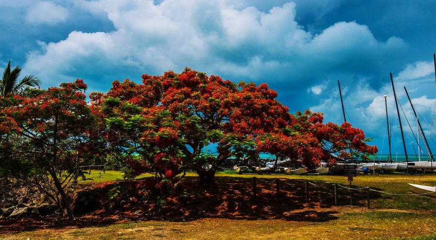 Tree Sky Nature Change Autumn Beauty In Nature Tranquility Outdoors Scenics Growth Day No People Cloud - Sky