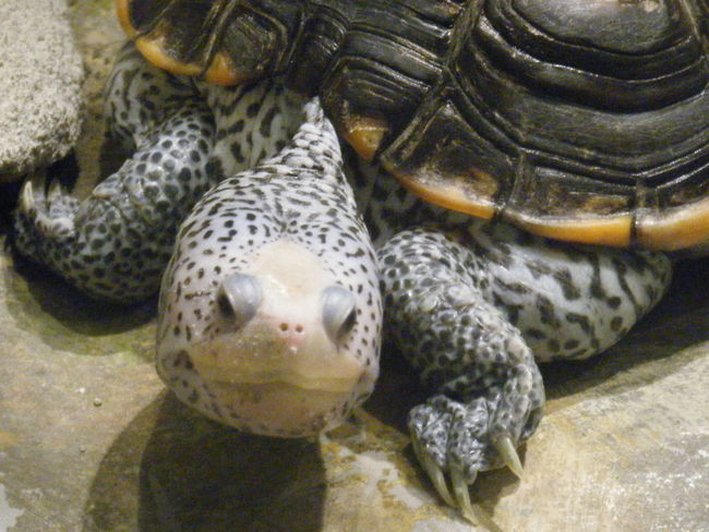 Turtle Face Close Shell Feet Green Nose White Spots Claws