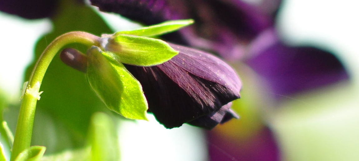 Close-up Flower Springtime