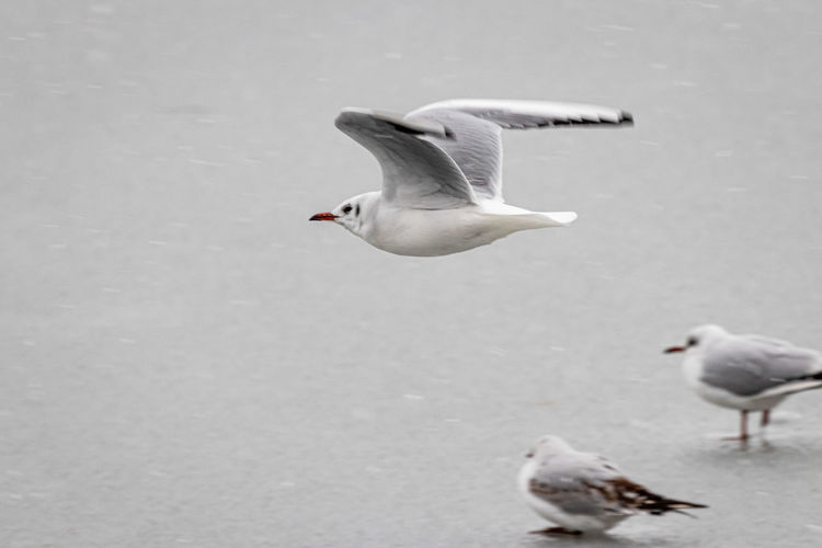 Seagulls flying in the water