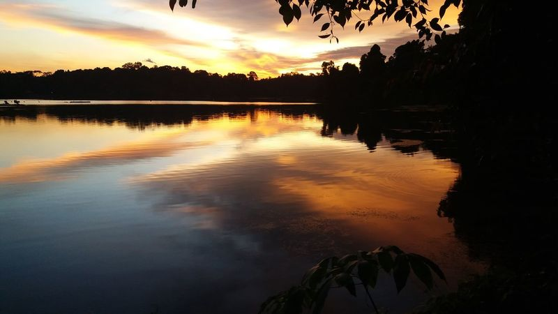 Orange evening sky Calm Water Calm Orange Sky Rainforest Water Reflections Water And Landscape Nature Landscape Forest Walk Evening Sun Nature Walk Sunset Colors Lake View Water Ripple Tree Water Sunset Lake Silhouette Reflection Dusk Sky Reflection Lake Reflecting Pool Tropical Tree Atmospheric Mood