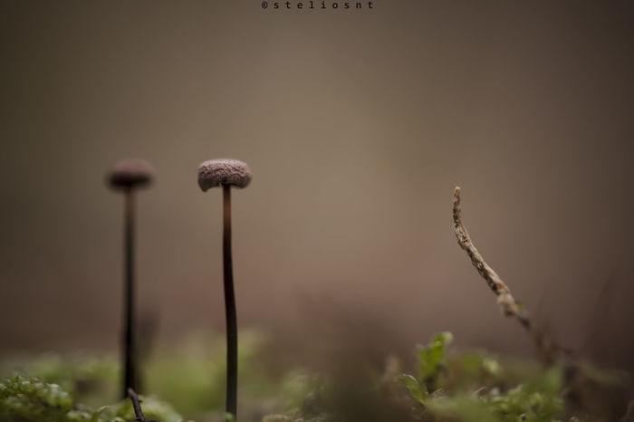macro mushroom... 100mm Macro Autumn Colors Canon Greece Macro Nature Macro Photography Minimalism Mushroom Nature Photography First Eyeem Photo