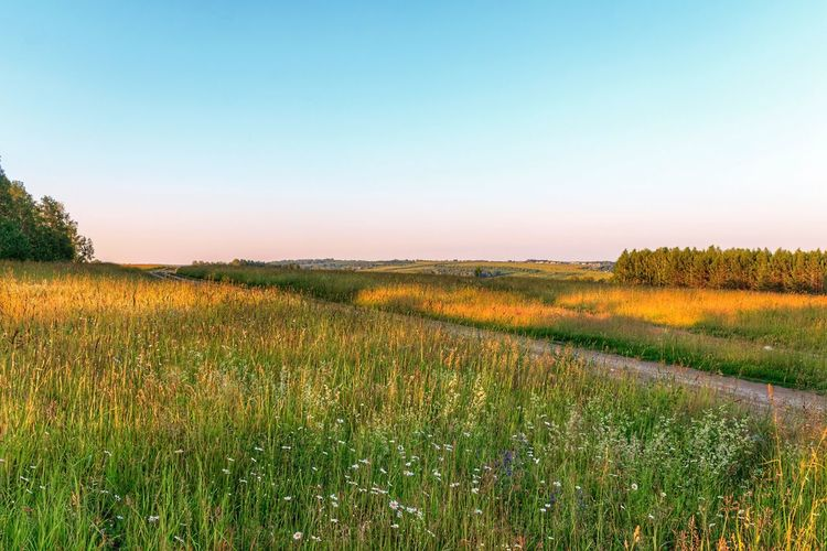 Siberia Nature Beauty In Nature Clear Sky Day Field Grass Green Color Growth Landscape Meadow Nature No People Outdoors Plant Rural Scene Scenics Siberia Sky Summer Sunset Tranquil Scene Tranquility Tree
