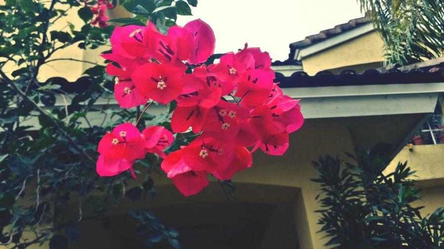 Life is beautiful Flowers Vibrantlife Life Florida Life