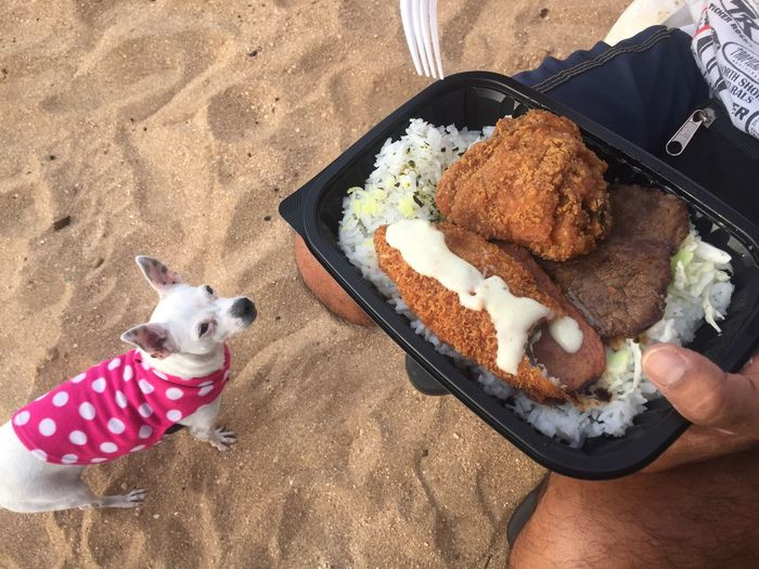 I Want! Domestic Animals High Angle View Pets Dog Animal Themes Mammal One Animal Freshness Food Outdoors Day Real People Ready-to-eat Human Hand Human Body Part