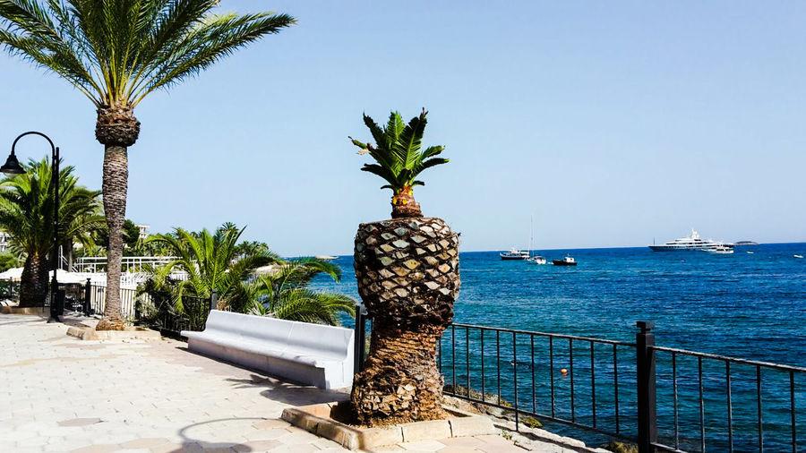 Isla De Ibiza Schiff Balearen Ibiza Stadt Blue Ocean Blue Sky Meer Insel Sunshine Summerday Ibiza Palmen Baby Palms