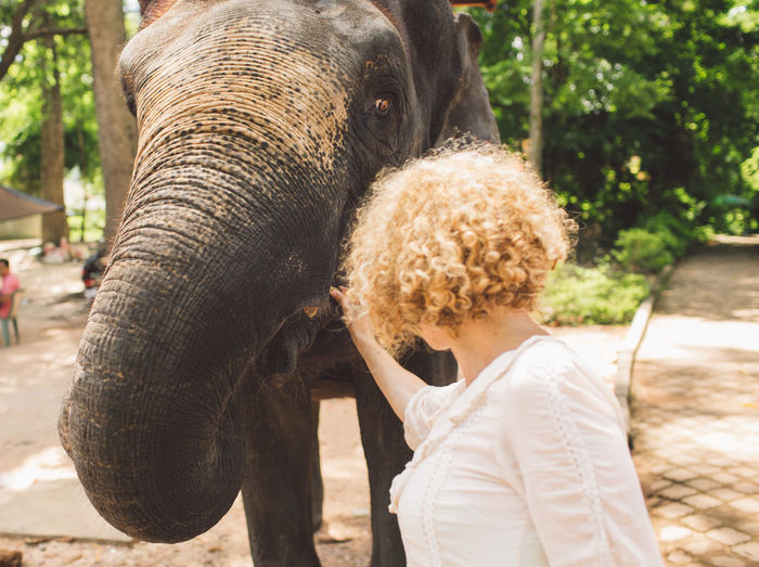 Siem Reap Cambodia Angkor Curly Hair Girl Feeding  Elephant Mammal One Animal Animal Trunk Day Domestic Animals Vertebrate One Person Animal Body Part Animal Wildlife Focus On Foreground Pets Real People Tree Domestic Nature Outdoors Herbivorous