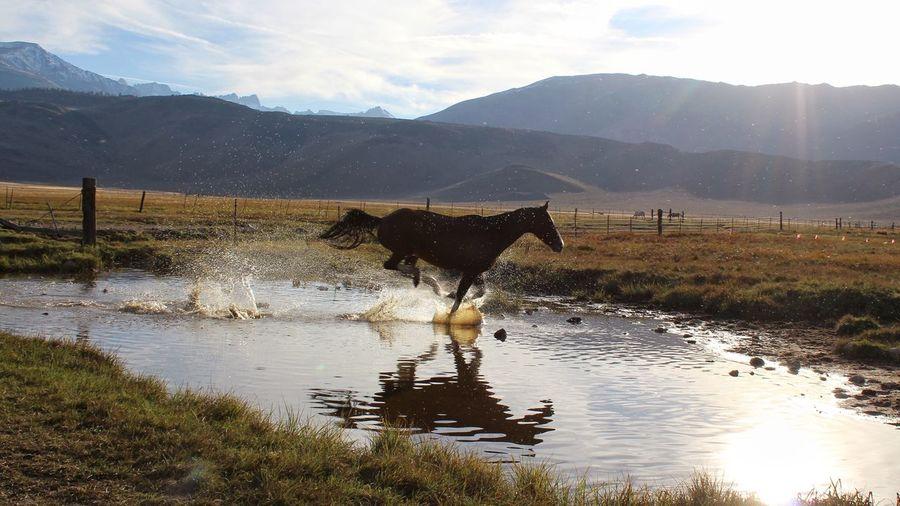 In a really big hurry Beauty In Nature Eye4photography  Horse Photography  Tadaa Community EyeEm Best Shots TheWeekOnEyeEM EyeEm Selects