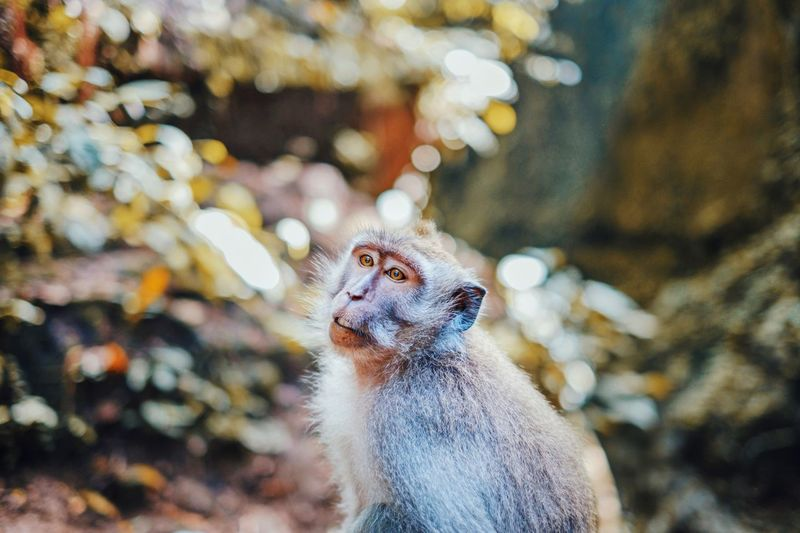 Close-up of monkey in forest