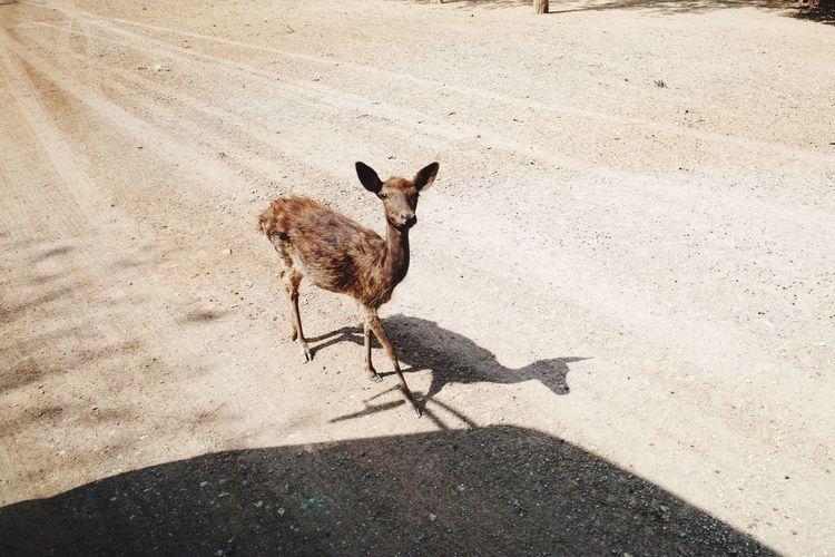 Deer Ricoh Gr