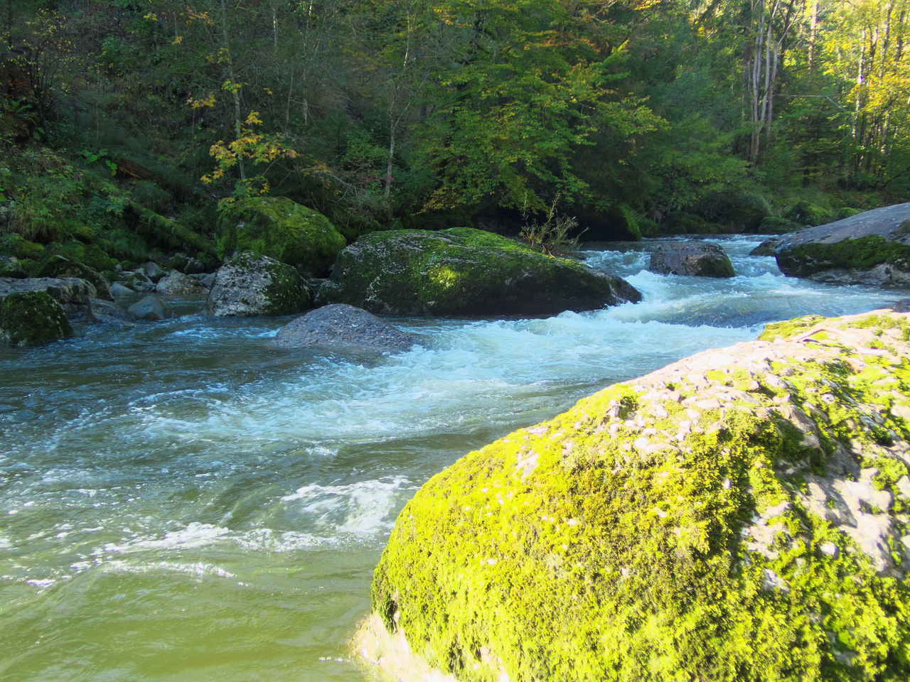 RIVER FLOWING AMIDST ROCKS IN FOREST