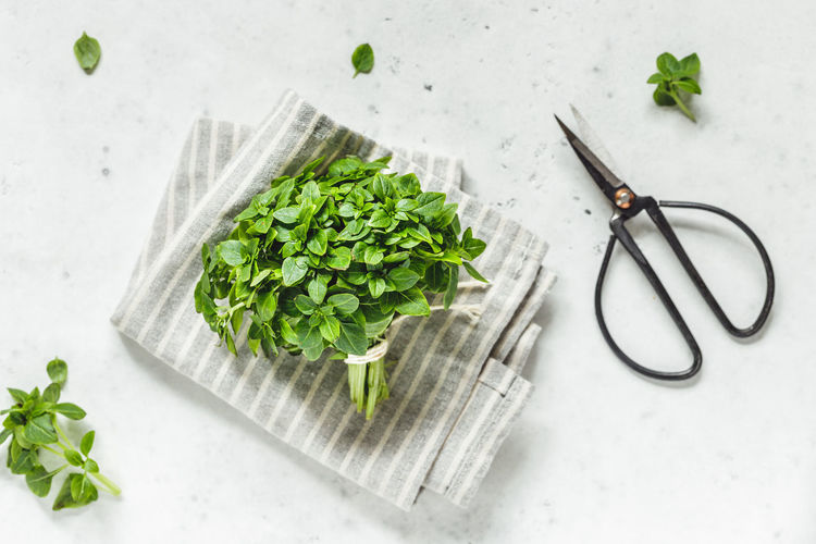Green Color Food Indoors  Food And Drink Leaf Still Life Plant Part Freshness Healthy Eating Vegetable Wellbeing High Angle View Plant No People Table Kitchen Knife Directly Above Nature Herb Cutting Board Mint Leaf - Culinary Leaves Chopped