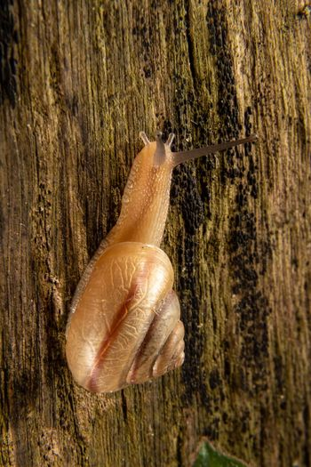 Molusco Gastrópode Mollusc Gastropod Shell Snell🐌 Close-up Day No People Nature Plant Wood - Material EyeEmNewHere Outdoors Textured  Animal Animal Themes Gastropod Tree Trunk Animal Wildlife