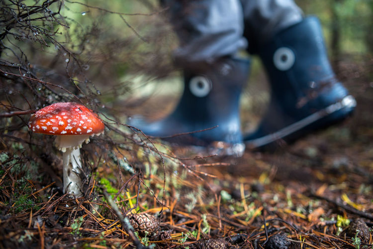 Autumn Boots Green Nature Red Twigs Amanita Muscaria Fly Agaric Forest Mushroom Outdoors Person In The Woods Picking Mushrooms Pine Needles Toadstool Walking Woods