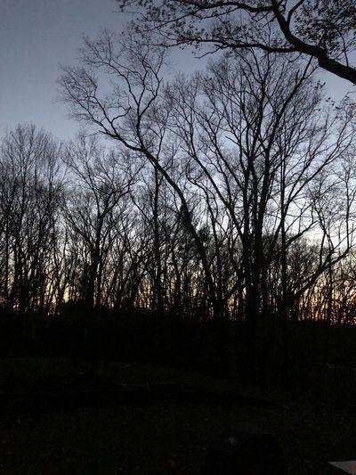 Tree Sky Beauty In Nature