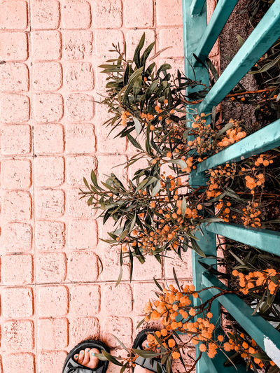 High angle view of plant on wall