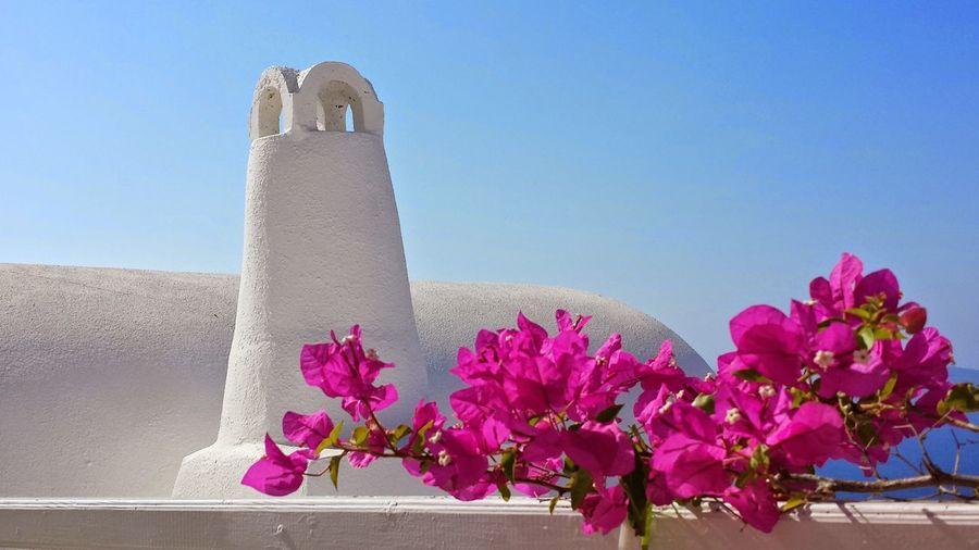 Pink bougainvilleas growing against tower at santorini