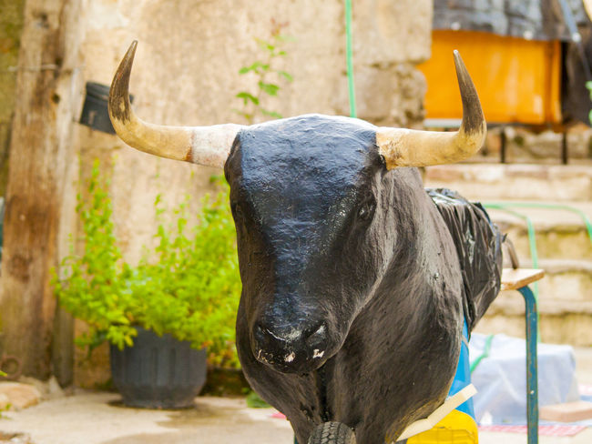 Bull Rural Lifestyle Animal Sculpture Animal Themes Bullfight Bullfighting Bulls Domestic Animals Game Horned Leisure Leisure Activity Leisure Games Lifestyles Mammal One Animal Play Playing Rural Life Rural Scene Sculpture Toro Toros