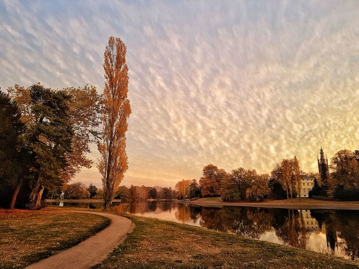 Nature_collection Beauty In Nature Nature Park Tree Sunset Rural Scene Sky Plant Cloud - Sky