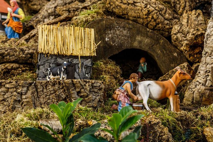 Madeira Island Animal Themes Baby Jesus Crib Crib Figurine Day Full Length Mammal Nature Outdoors Real People Rock - Object Shepherds