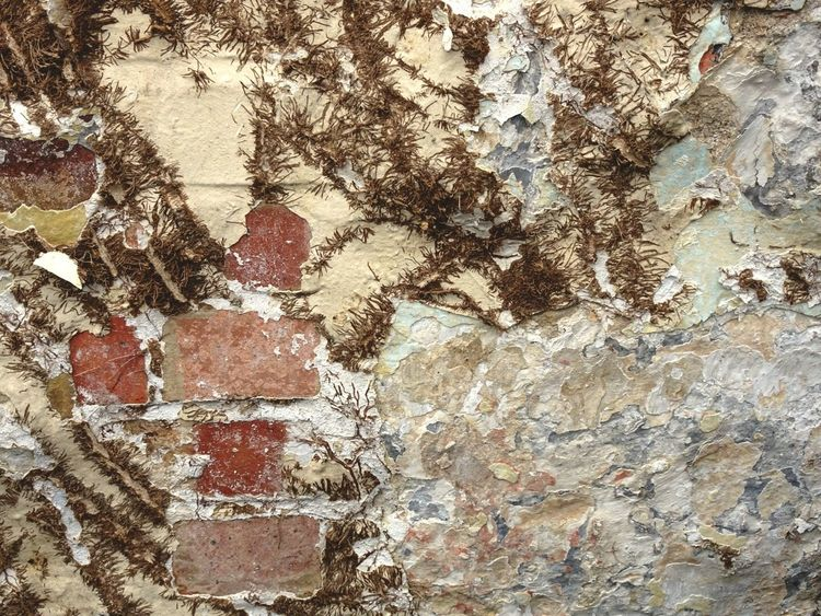 Brick Wall Bricks Ivy Ivywall Old Old Buildings Old Pic  Decay Paint Decay Beauty Of Decay