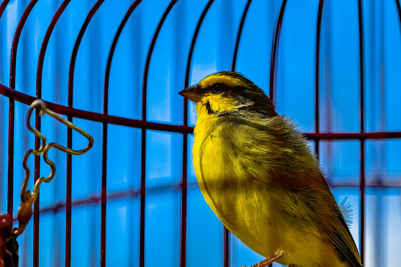 Low angle view of bird in cage