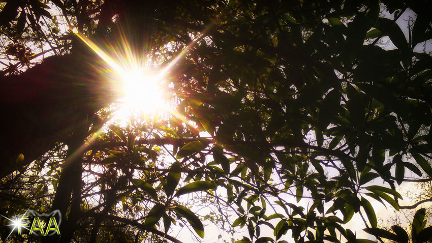 Beauty In Nature Branch Day Growth Leaf Lens Flare Low Angle View Nature No People Outdoors Sky Sun Sunbeam Sunlight Tranquility Tree