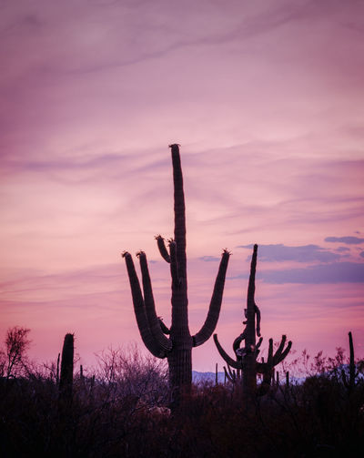 Silhouette cactus plants on field against sky at sunset