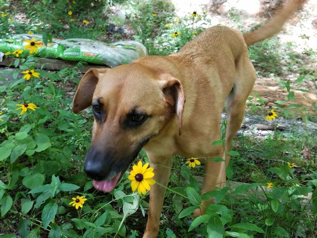 Nala Shelterdogs Dogsitter ♡ Mountain Life One Animal Mammal Animal Themes Leaf Pets Dog Nature Plant Flower Outdoors Domestic Animals Green Color No People Close-up Day Portrait Beauty In Nature