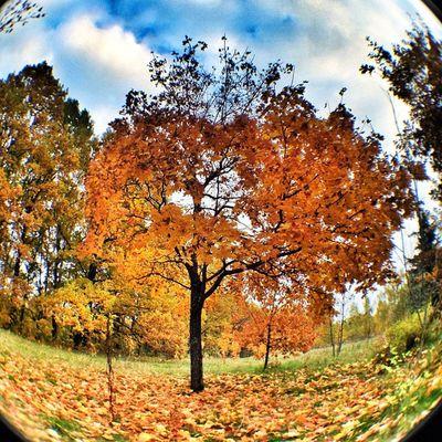 #autumn #tree #hdr #hrd_pics #hdr_house #all_ukraine #ukraine_hdr #iguides_photo #in_ukr #instago #ig_russia #igukraine #igs_photos #instagood_ua #insta_ukraine #ua_iphoneography #kiev_ig #kievblog #insta_kiev #ukraine_art #insta_kyiv #инстаграм_порусски Kievblog Ukraine_art Beautiful инстаграм_порусски Tree Insta_kyiv HDR Insta_kiev Autumn айфонография Amazing Kiev_ig Kiev Hdr_house Iphoneonly All_ukraine Iphonesia Ukraine_hdr Ukraine In_ukr Instago Ig_russia HRD_pics Iguides_photo Igs_photos Insta_ukraine Ua_iphoneography Igukraine Real_ukraine Instagood_ua