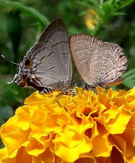 butterflies on