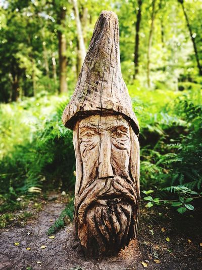Sculpture Mystic Park Parks Chilling Relaxing Tree Forest Tree Trunk Close-up Tree Stump WoodLand