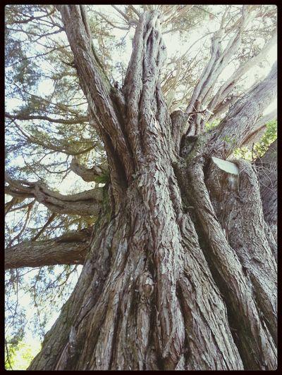 Cornwall Tree Summer