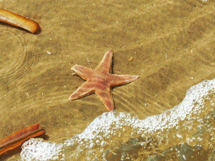 Starfish  Animals In The Wild Water Sea Marine Animal Themes Animal Wildlife Animal Sea Life One Animal Underwater Star Shape Fish Shape Nature Vertebrate No People Close-up UnderSea Outdoors