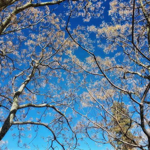 winter colours and sky No People Naure Shot Winter Bhutan Travel Photography Backgrounds Blue Full Frame Pattern Textured  Close-up Sky Branch Bare Tree Blue Color Tree Trunk Lone