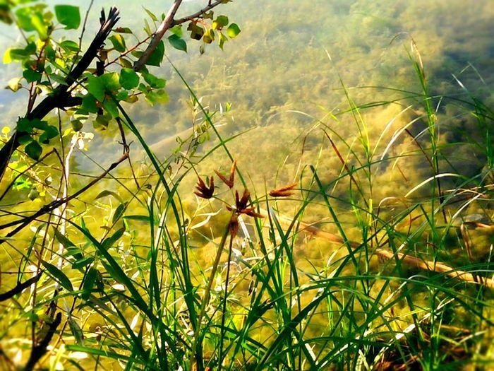 fondaki gölün belirgin olmayışı kadar belirsizdir bazı çözümler. ve bir o kadar da gerçek! farkedemeyiz... Mavigol In Turkey Rekreasyon The Great Outdoors - 2015 EyeEm Awards Discoveryourcountry From My Point Of View Göl Ankara HerbFestuca Plantography