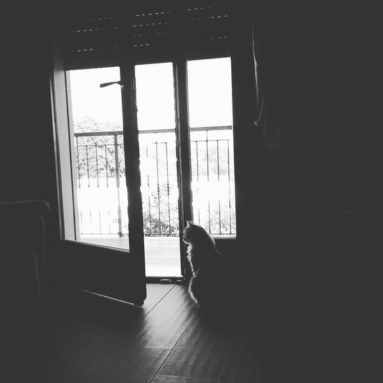 Cat Dark Day Domestic Life Flooring Home Interior Indoors  Lights And Shadows Resting Side View Window