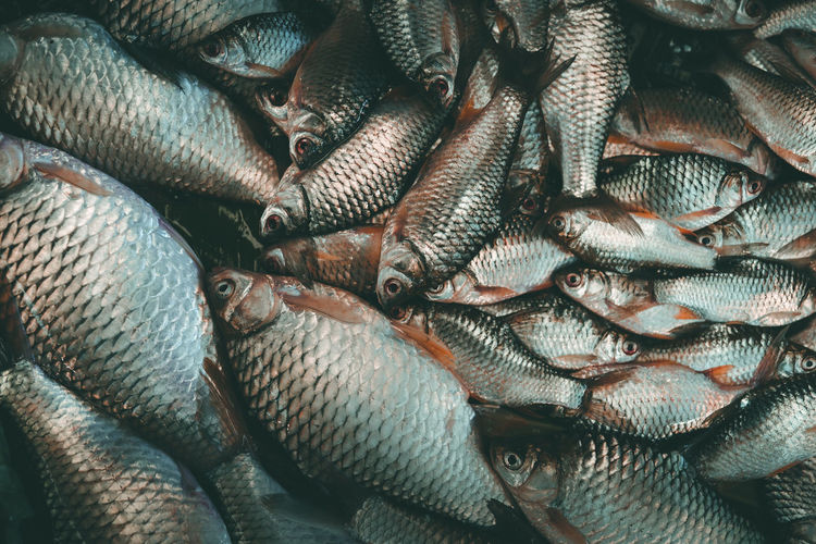 Fish raw food Fish Full Frame Food Backgrounds Food And Drink Freshness Wellbeing Seafood For Sale Vertebrate Healthy Eating Animal Retail  No People Large Group Of Objects Market Abundance Raw Food Still Life Close-up Fish Market Sale Retail Display Animal Themes Pattern