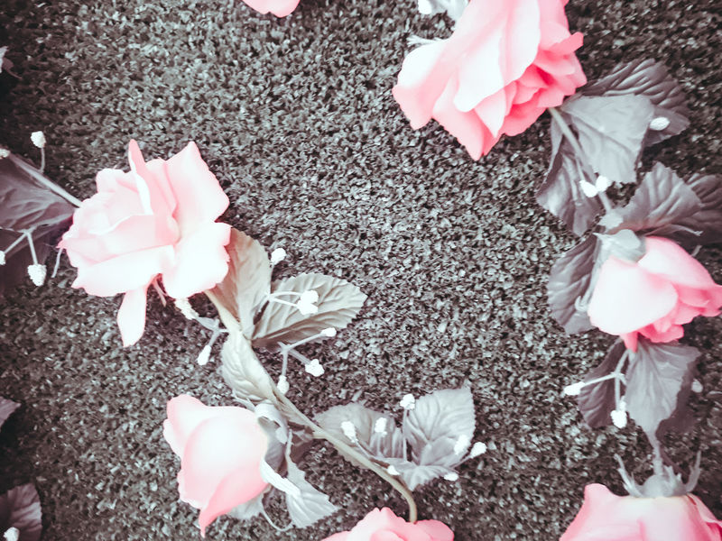 Beauty In Nature Blooming Close-up Day Flower Flower Head Fragility Freshness Growth High Angle View Nature No People Outdoors Petal Pink Color Rose - Flower Rose Petals