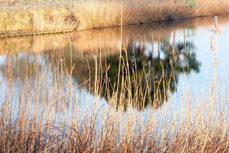 Sony A700 The Netherlands Winter Zeeuws Vlaanderen Day Grass Nature Outdoors Plant Reflections In The Water Scenics Sunrise Tranquil Scene Water Zeeland