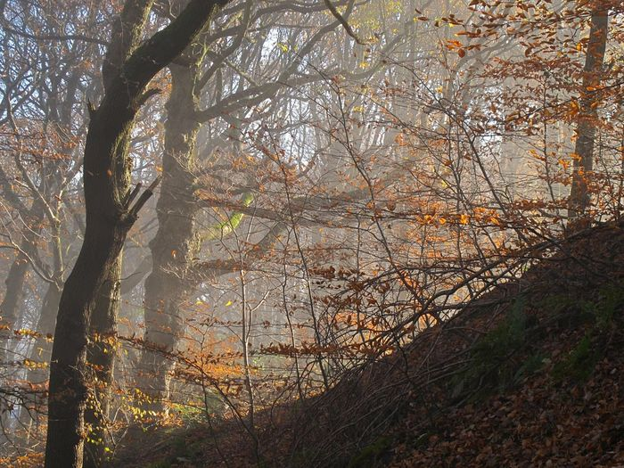 Scenics Woodlands Fog Autumnbeauty Autumn Leaves Foggymornings Cold Temperature Frosty Days Autumn Tranquil Scene Valleys Beauty In Nature Fineartphotography Bare Tree Shadow Beauty In Nature No People Outdoors Sunlight Landscape Winter Is Coming Nature