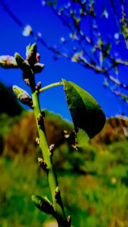 Nature Plant Green Color Growth No People Outdoors Leaf