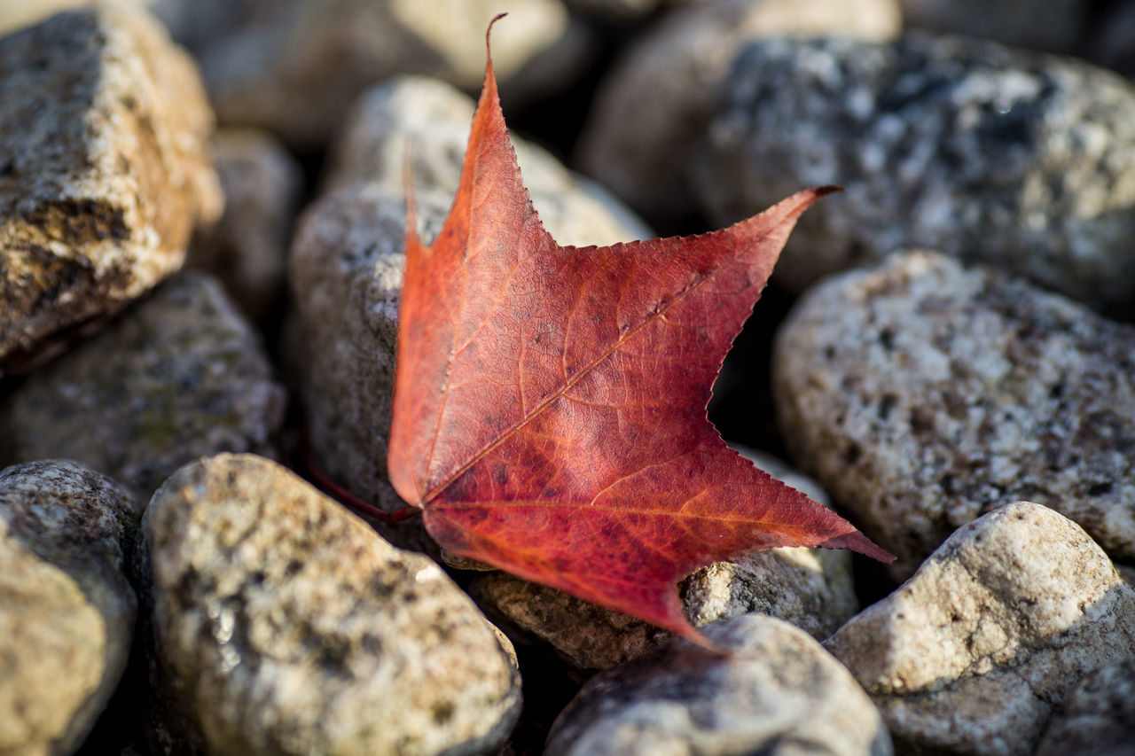 Close-Up Of Autumn Leaf On Rock