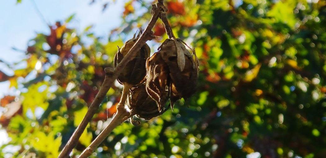 fall Fall Trees